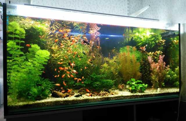 Продам: Аквариумные растения и рыбки