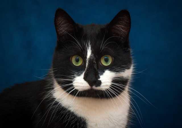 Отдам даром: Котик Родион в поисках дома! В добрые ру