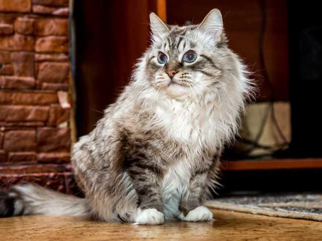 Отдам даром: Отдадим кота