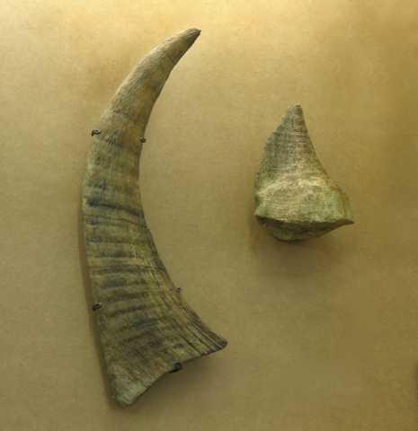 Куплю: Куплю рог носорога, бивни мамонта и слон