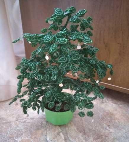 Продам: Денежное дерево
