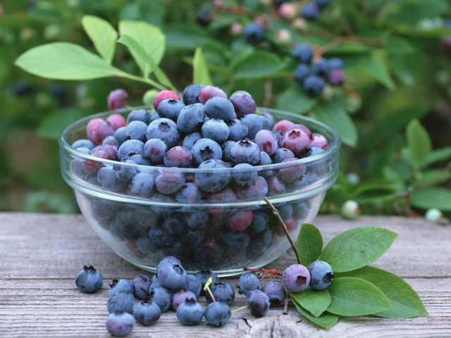 Продам: Черника ягода (сушеная)