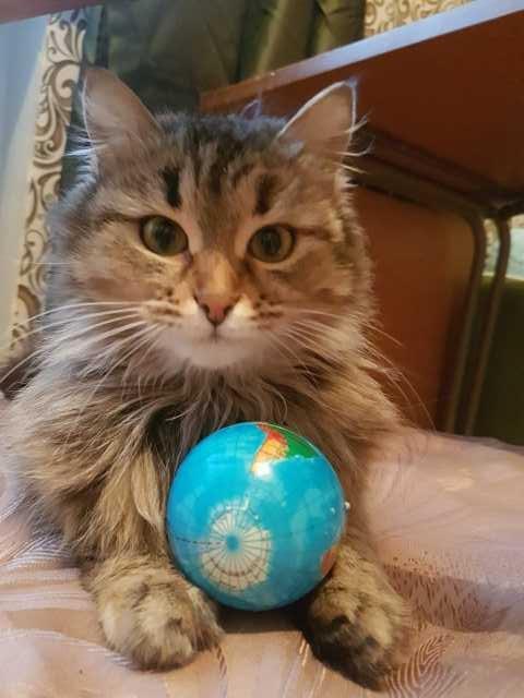 Отдам даром: Кошечка Марта в добрые руки