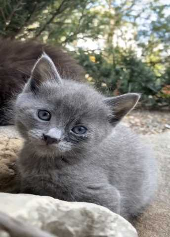 Отдам даром Котята, кот, кошка