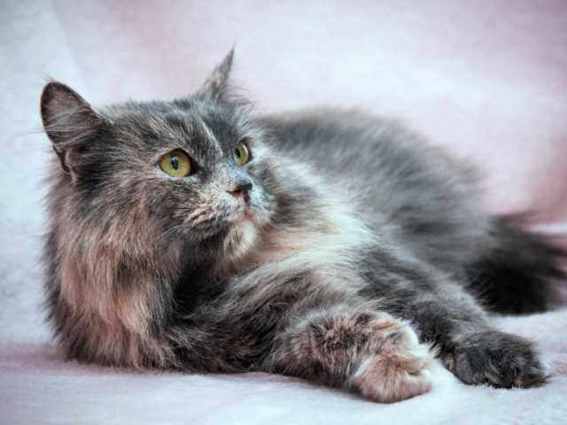 Отдам даром: Кошка, которую зовут Мышка