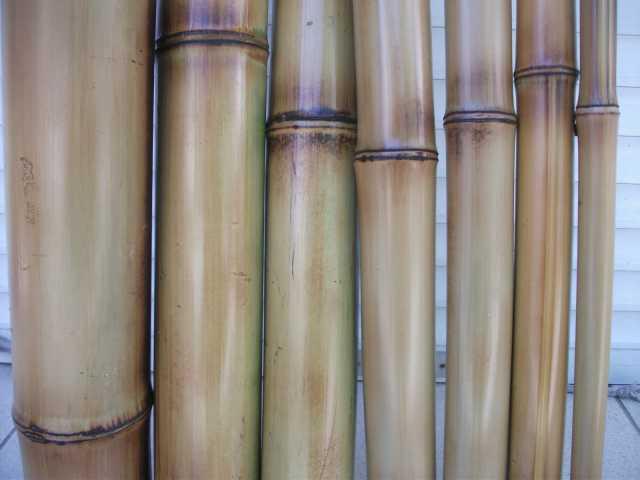 Продам: Бамбук стволы