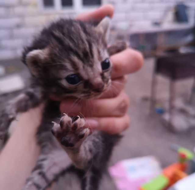 Отдам даром: Котят