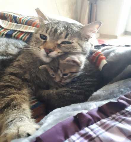 Отдам даром: двух умных, хорошеньких котят!