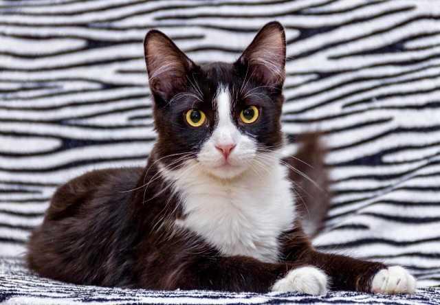 Отдам даром: Котик Макс в поисках родителей