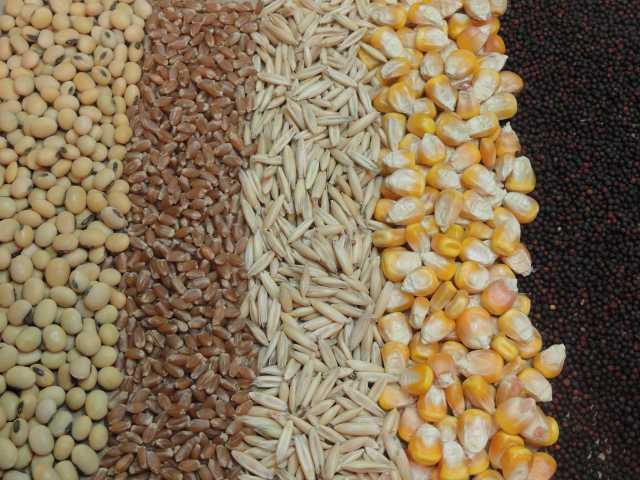 Продам: Пшеница,ячмень ,овёс
