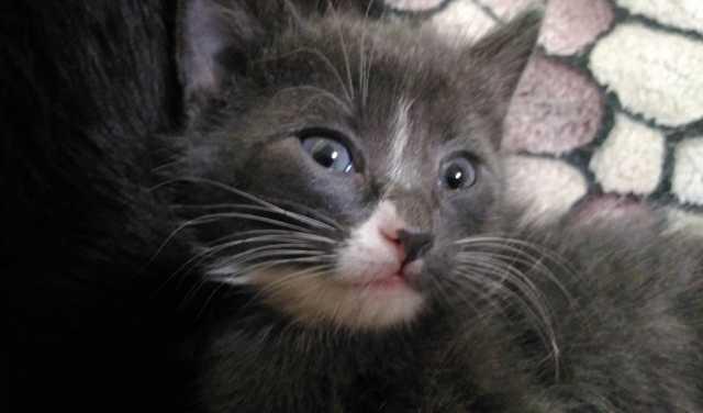 Отдам даром: Полуторамесячных котят