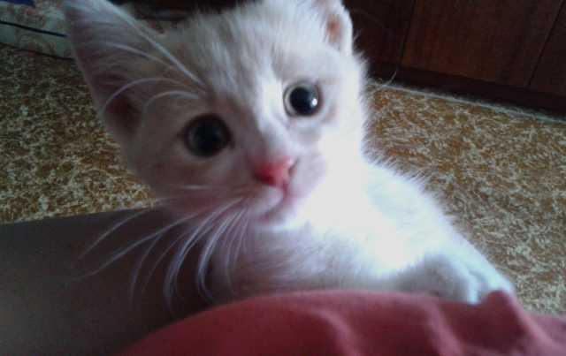 Отдам даром: Котенок 1,5 месяца