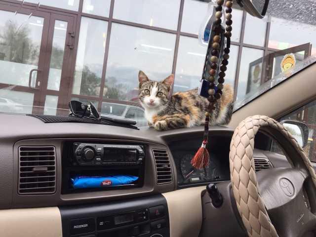 Отдам даром: Отдам котенка в добрые руки