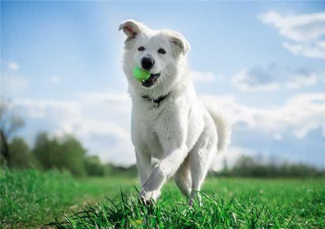 Отдам даром: Ищет дом молодой пес Норман
