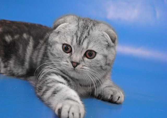 Продам: Красивые котята