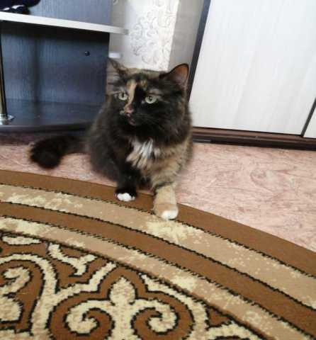Отдам даром: Кошка ищет дом!