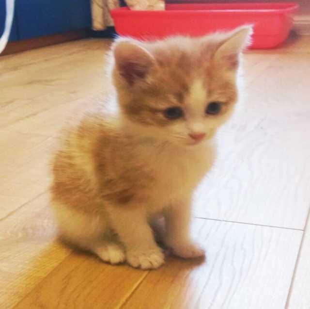 Отдам даром: Отдам милашек котят