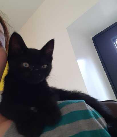 Отдам даром: Котёнок (девочка)