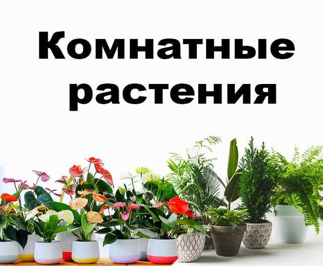Продам: Комнатное растение