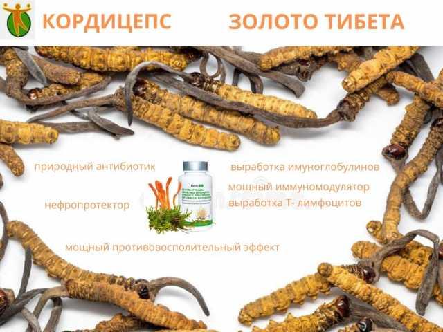 Продам: Препарат Кордицепс
