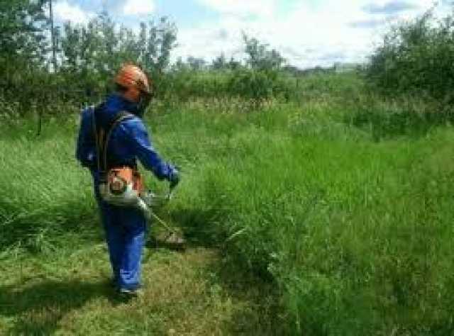Предложение: Скос покос травы, вырубка кустарника