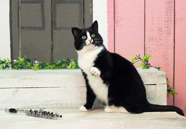 Отдам даром: Ч/б кошка Пикколо (4г.) ищет дом!