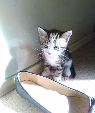 Отдам даром: Миниатюрный котик