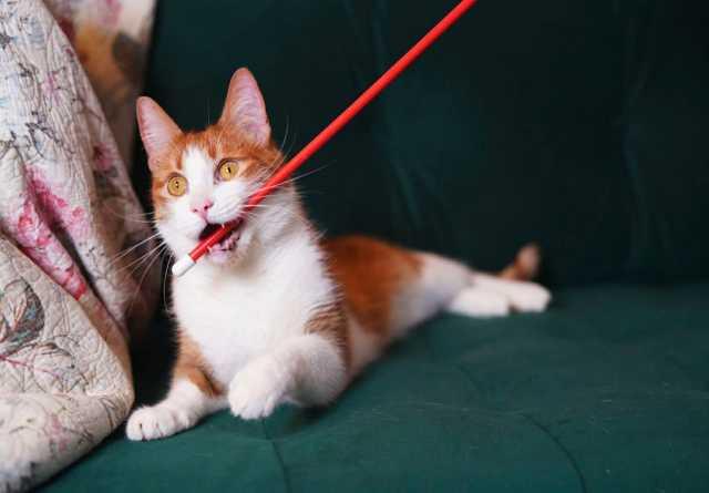 Отдам даром: Кот ищет семью
