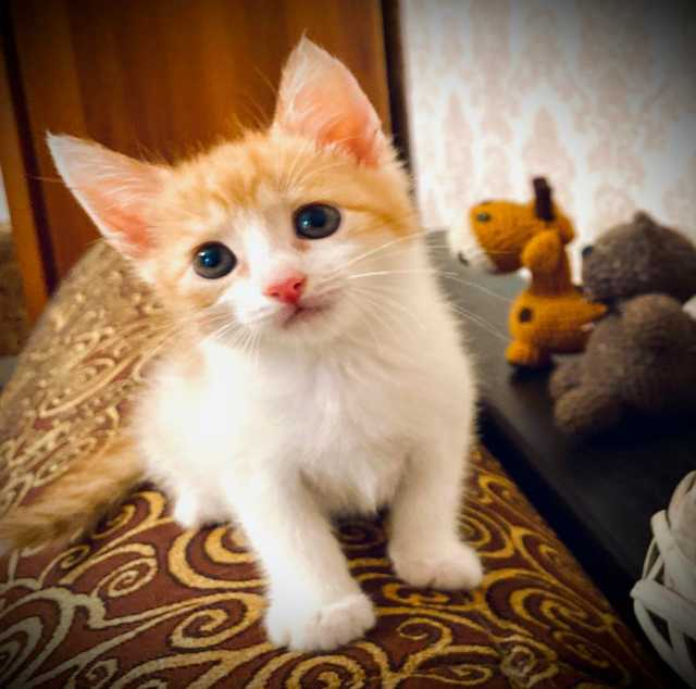 Отдам даром: Котята бесплатно