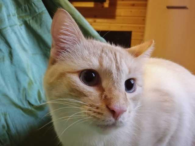 Отдам даром: Котик Макс в любящую семью