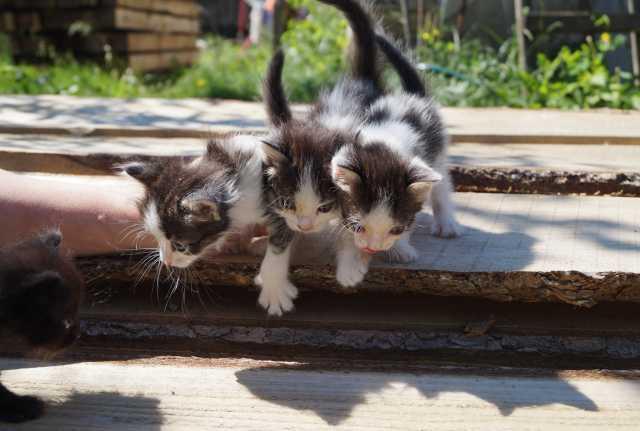 Отдам даром: Отдам котиков в заботливые руки