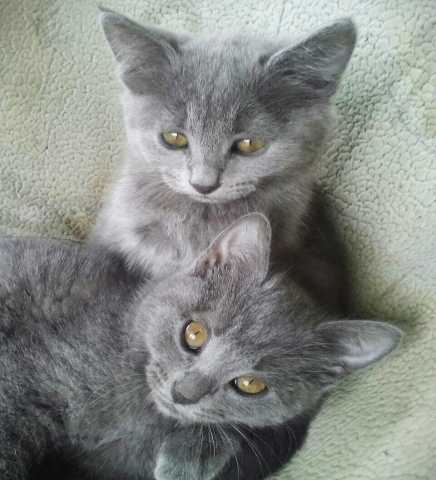 Отдам даром: Ласковые котята
