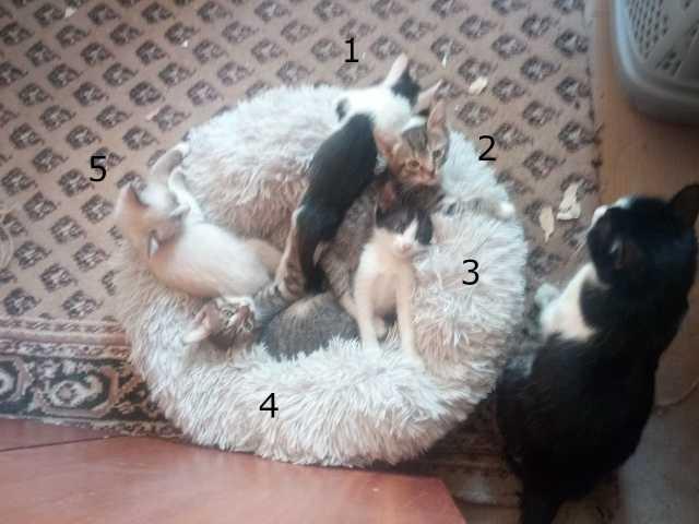 Отдам даром: Котята от разных котов
