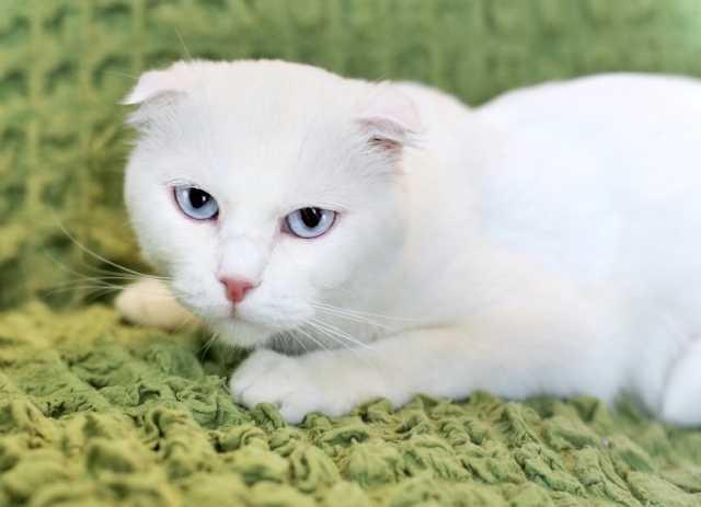 Отдам даром Николь особенная кошка ищет доброе сердц