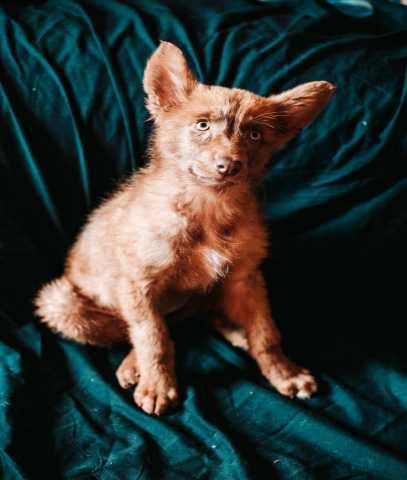 Отдам даром: Классная собачка