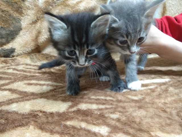 Отдам даром: Котёнок котята