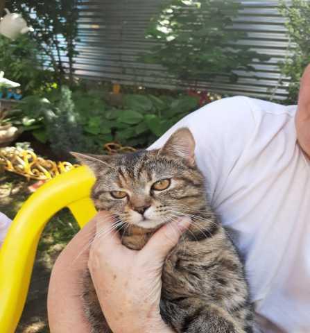 Отдам даром: Найдена кошка