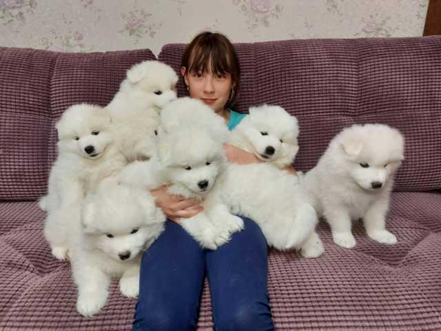 Продам: щенки