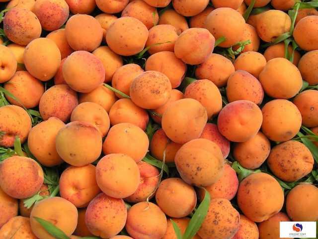 Вакансия: Упаковщики абрикосов (вахта проживание)