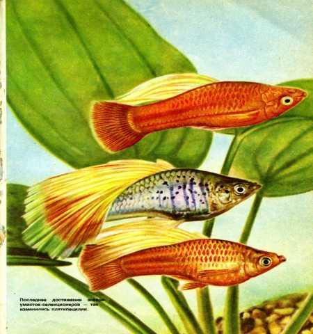 Продам: 1966 Махлин Занимательный аквариум