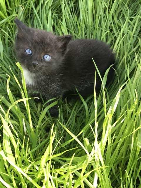 Отдам даром: Котёнок (мальчик)