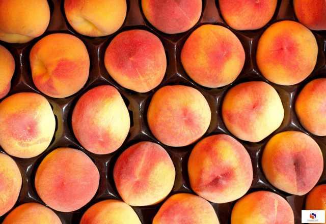 Вакансия: Упаковщики персиков