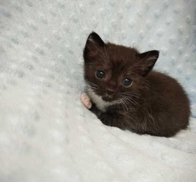Отдам даром: Котенок девочка в добрые руки