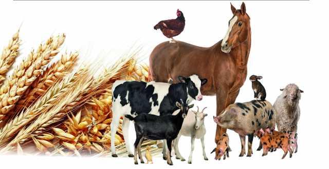 Продам: комбикорма и зерновые, добавки и вет пре
