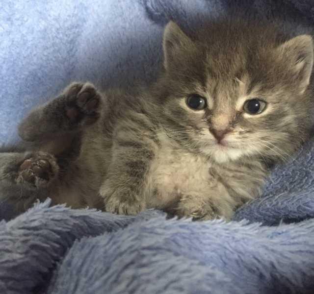 Отдам даром: Котята 1,5 месяца