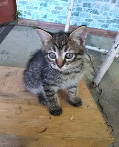 Отдам даром: Срочно котят