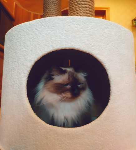 Продам: Домик - когтеточка для кошек