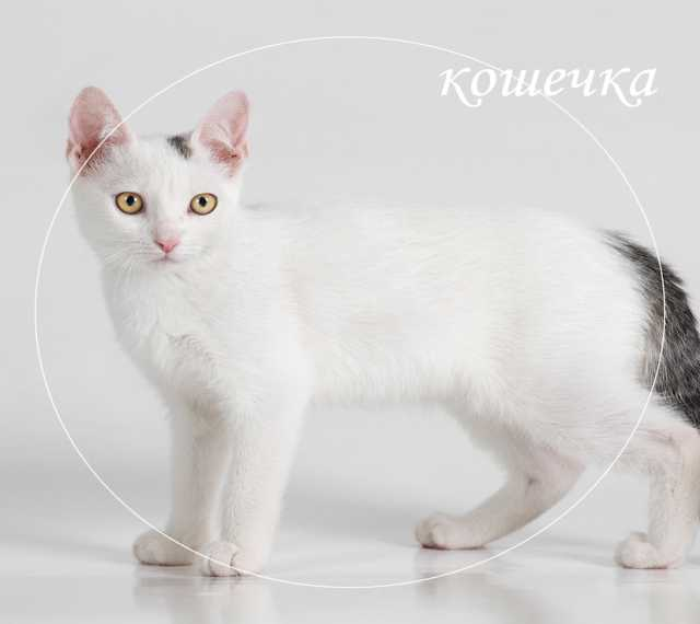 Продам нарядного миниатюрного котенка