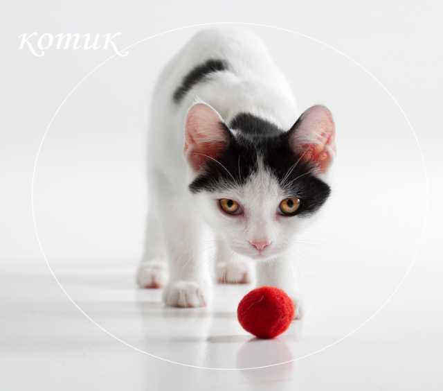 Продам харизматичного котенка