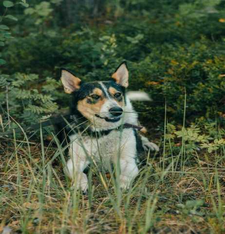 Отдам даром: Собака Келли ищет дом!